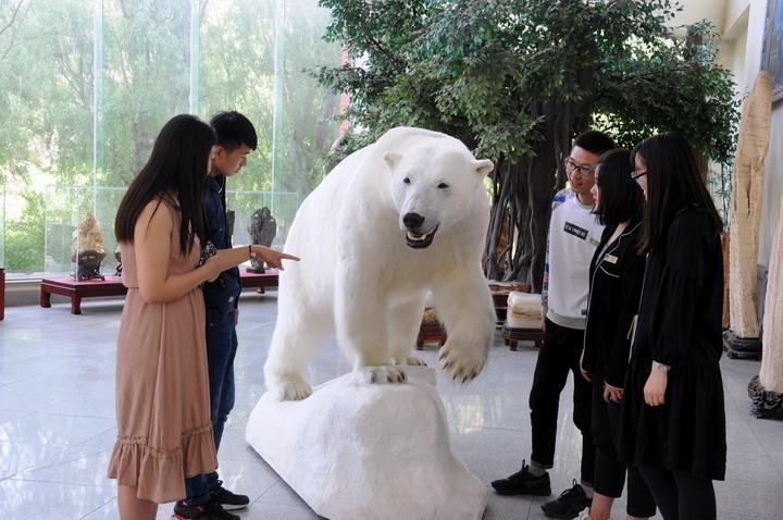 图为游客观看雌性北极熊2.JPG
