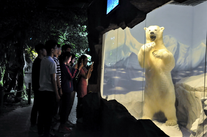 图为游客观看雄性北极熊标本.JPG